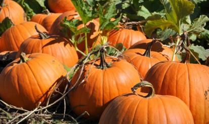pumpkin-patch-san-diego