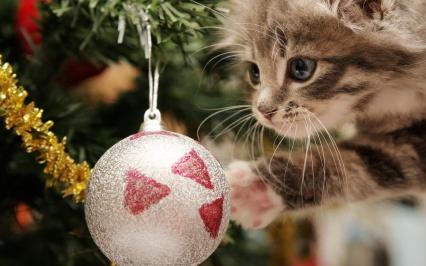 Christmas-Cat1
