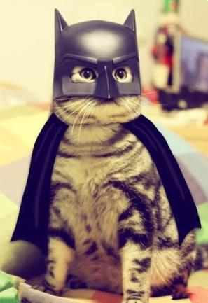cat-batman-halloween-costume-jpg